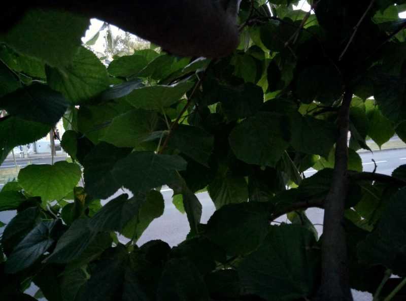 Meizu M5 Note фото в тени